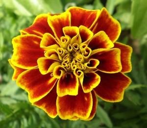 flower-249510_960_720