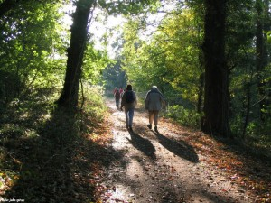 Killerton_Woods_-_geograph.org.uk_-_31164 copy