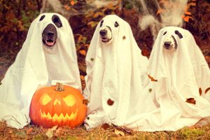 Why You See Dogs in Superhero Costumes This Halloween